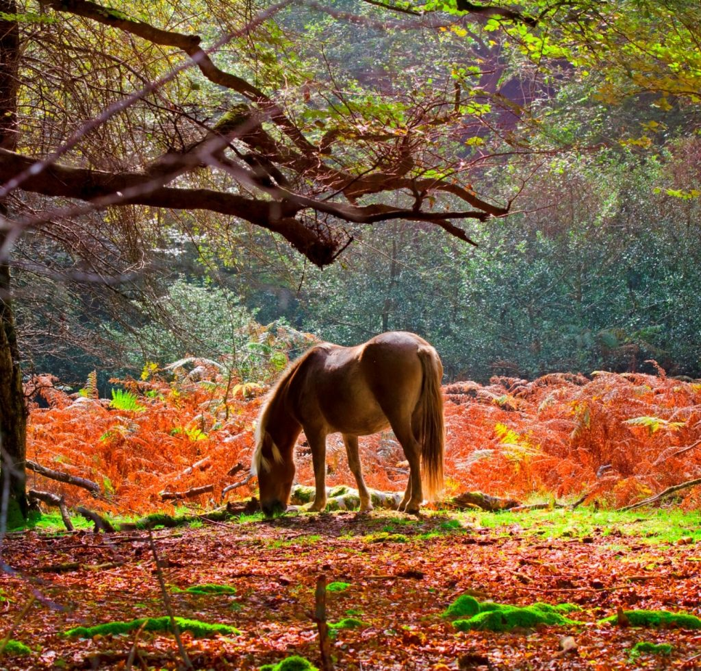 Come visit the New Forest ponies.